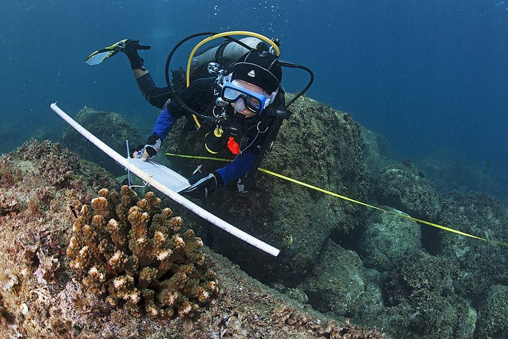 Coral Reef Monitoring In The Gulf Of California