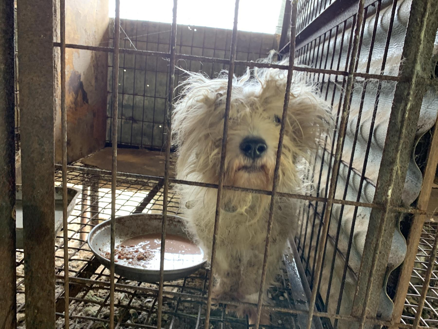 Hsi Dog In Cage 2