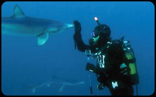 Iam White Shark