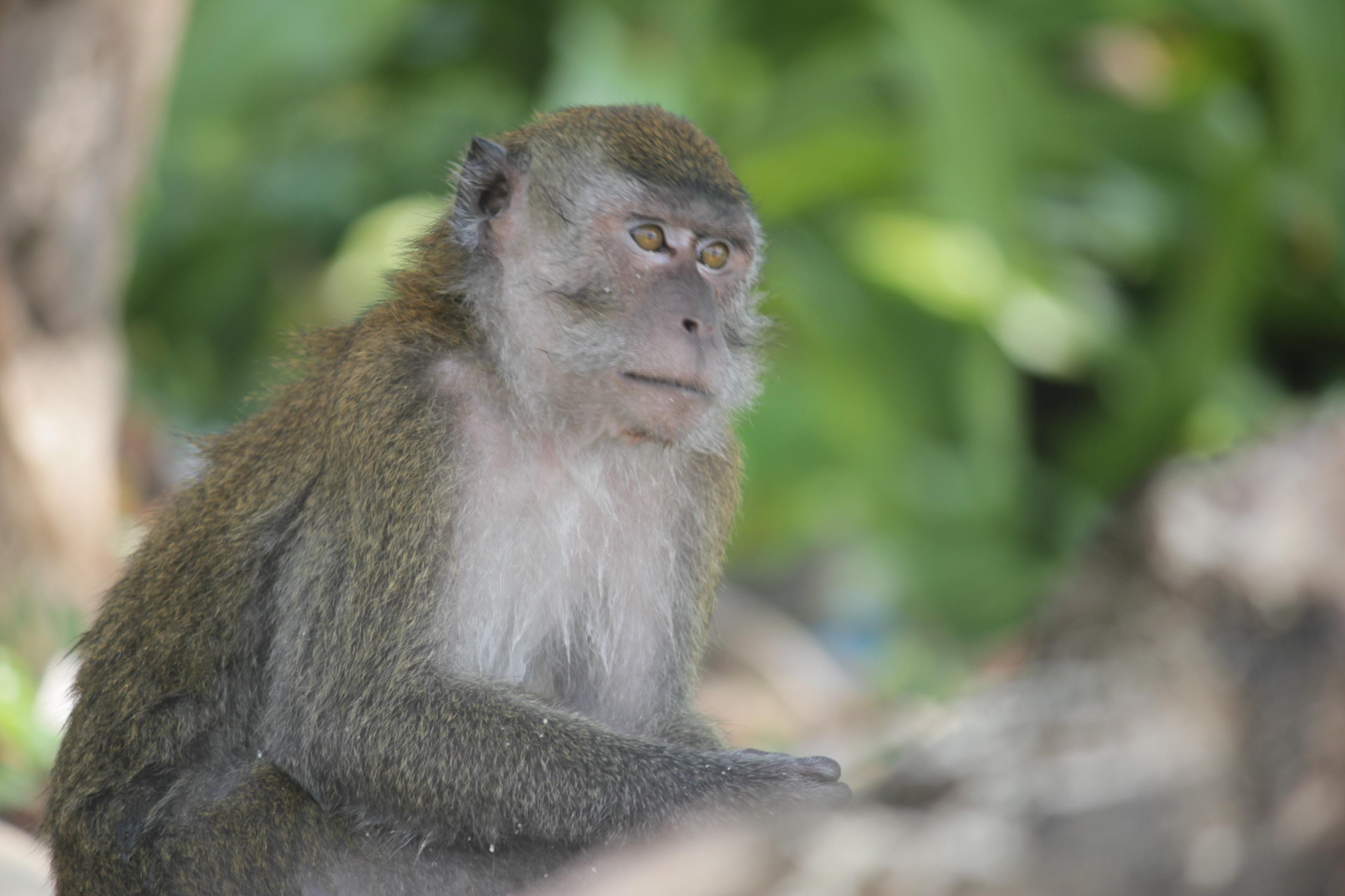 Jaan Monkey