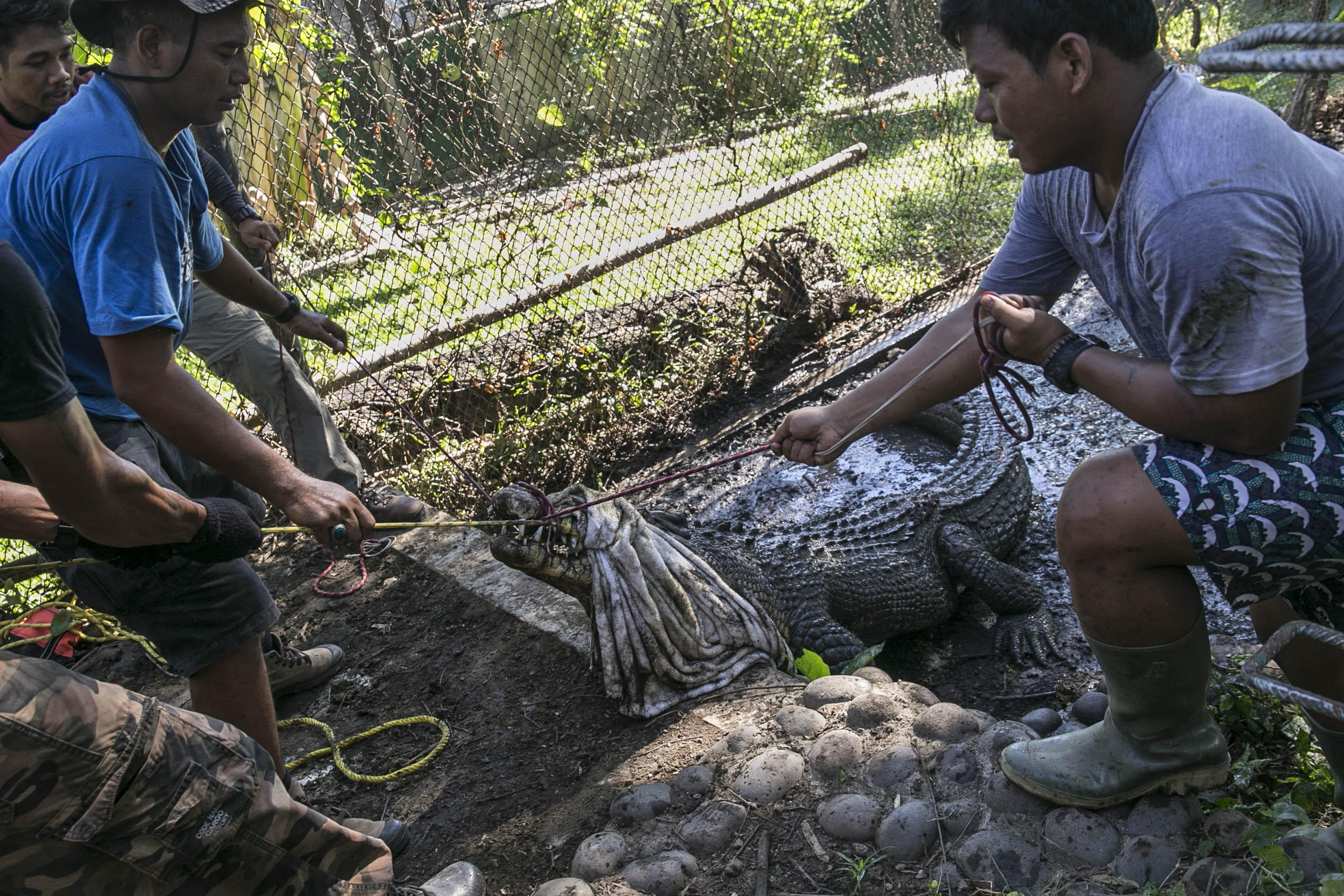 Jaan Croc Rescue Relocation 2020 Jan 18