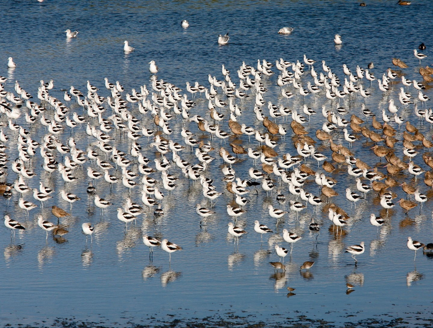 Save The Bay Zane Cirne Avocet