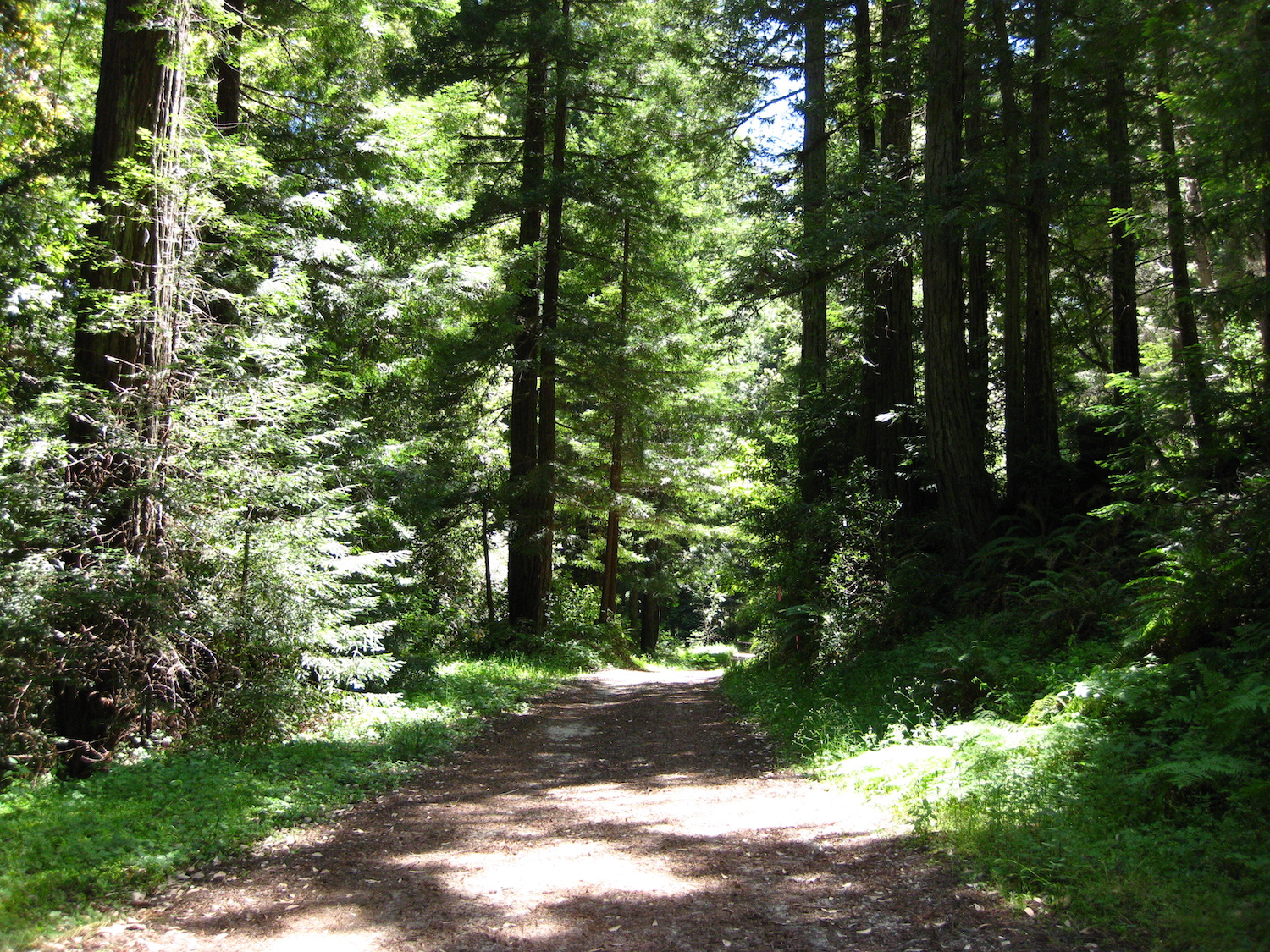 Save The Redwoods San Vicente