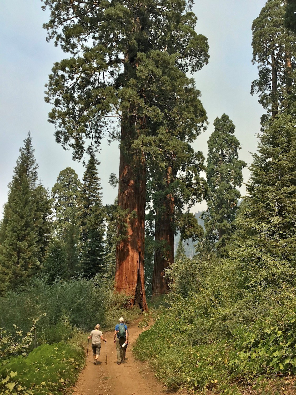 Save The Redwoods Hikers