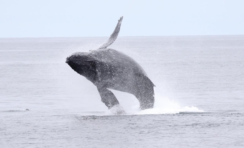 Whale Pic 1