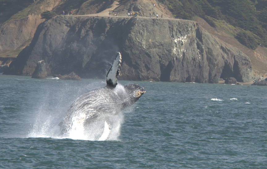 Whale Pic 2 Jpg